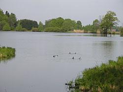 Rybník nedaleko pramene