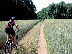 Cesta polem u rybníku Rožmberk