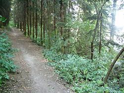Lesní úseky na tvrdých cestách patří k těm odpočinkovým.