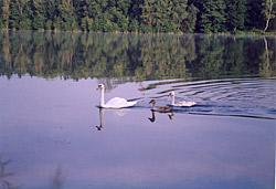 Romantika rybníka nedaleko pramene Svitavy.