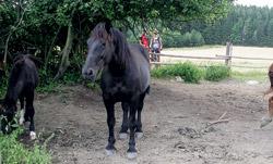 Ohrada s koňmi těsně před Hornosínem