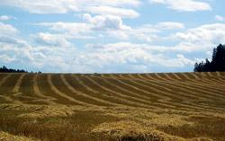 Sklizená pole u Hornosína