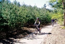 Borový les Kersko
