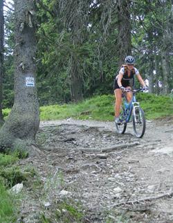 Typická cyklotrasa pro bajky v Polsku