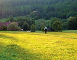 Louka v údolí Zbirožského potoka