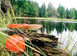 I nejedlé houby mají své kouzlo!