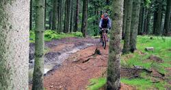 Lesní cesta před Větrovem