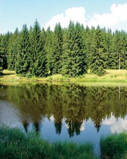 Pohorský rybník