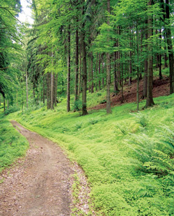 Cesta Píseckých hor