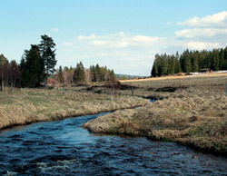 Hamerský (Kvildský) potok
