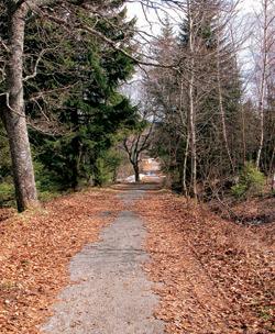 Cestička u Bučiny