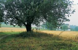 Samota Blatina